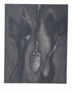 Untitled (Forms from Nature), Carol Todaro